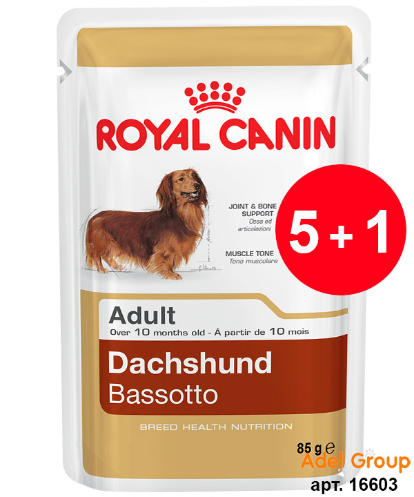 Royal Canin Maine Coon Adult online kaufen